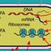 Baktériumsejt